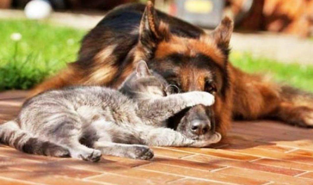 "Smile Βίντεο: Ποιος είπε ότι... τρώγονται σαν τον ""σκύλο με τη γάτα"" - Αυτοί οι δυο χαριτωμένοι είναι οι καλύτεροι φίλοι! - Κυρίως Φωτογραφία - Gallery - Video"