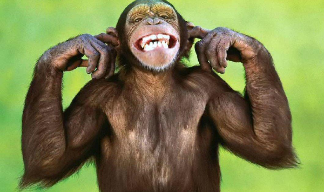 Εξωφρενικό μα... συνέβη στην Κίνα! Αντί για κόκκινο φανάρι, γυναίκα είδε τα οπίσθια μαϊμούς και σταμάτησε προκαλώντας ατύχημα (ΦΩΤΟ) - Κυρίως Φωτογραφία - Gallery - Video