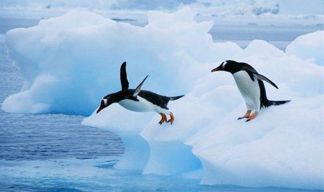 Ανακαλύφθηκε απολίθωμα γιγάντιου πιγκουίνου: Είχε ύψος ανθρώπου και ζούσε πριν από 60 εκατ. χρόνια   - Κυρίως Φωτογραφία - Gallery - Video