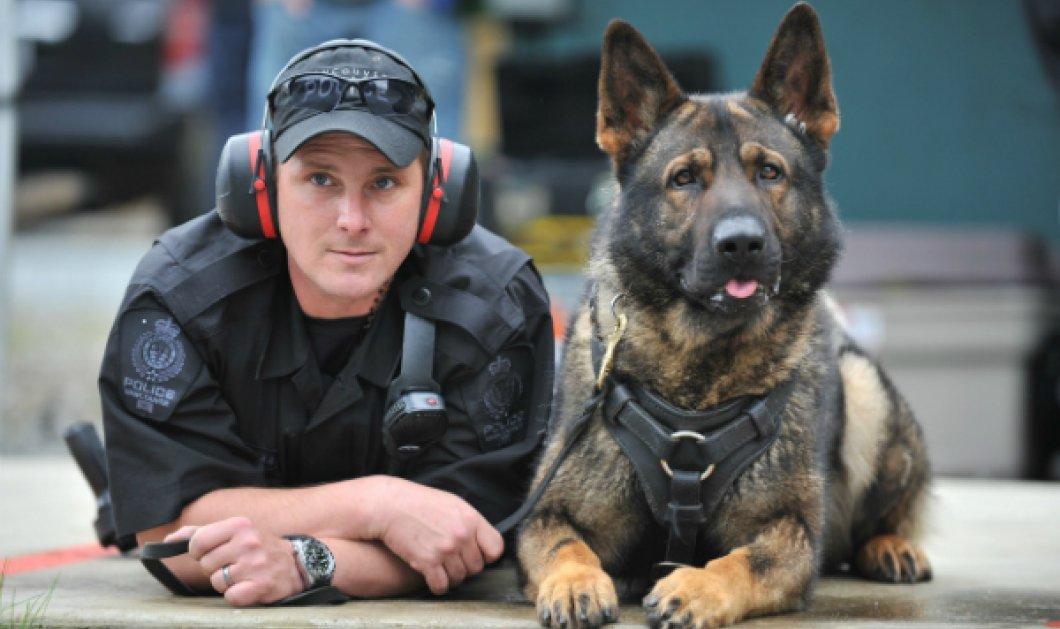 """Συγκινεί το μήνυμα των Αρχών για την γλυκιά σκυλίτσα, τον ελληνικό υπαστυνόμο Ρεξ: """"Σ' ευχαριστούμε Grace για όσα πρόσφερες, δεν θα σε ξεχάσουμε..."""" - Κυρίως Φωτογραφία - Gallery - Video"""