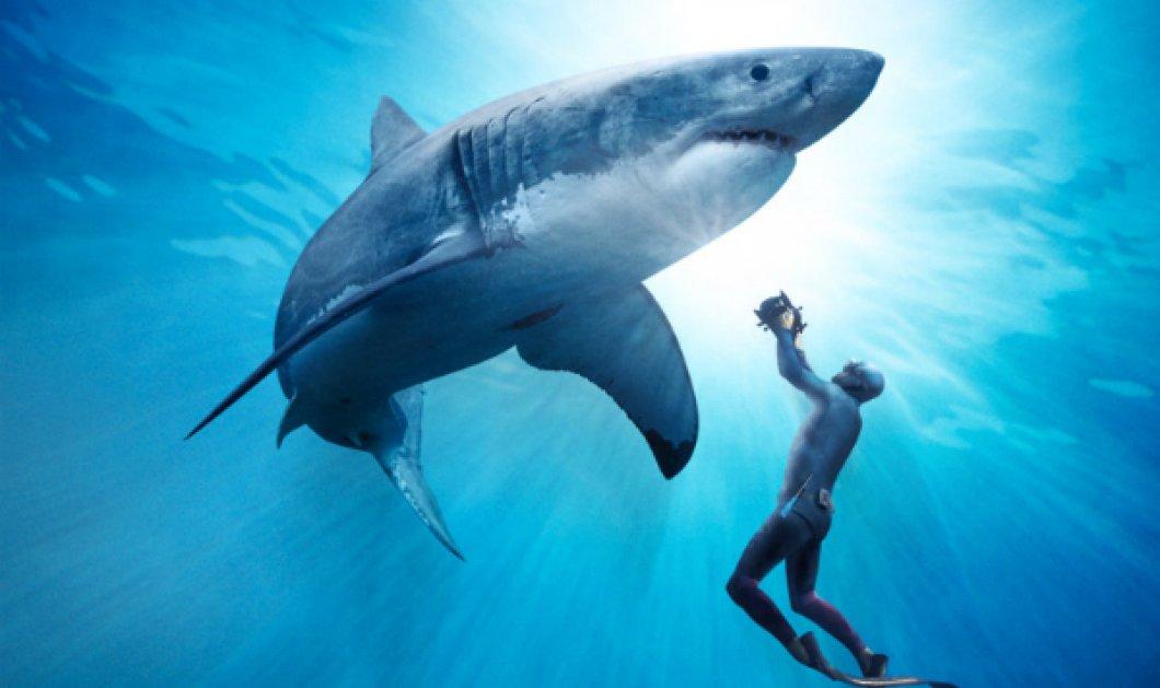 Απίστευτο φαινόμενο: Πάγωσαν & πέθαναν οι λευκοί καρχαρίες από το πολικό ψύχος - Φωτό που σοκάρουν!  - Κυρίως Φωτογραφία - Gallery - Video