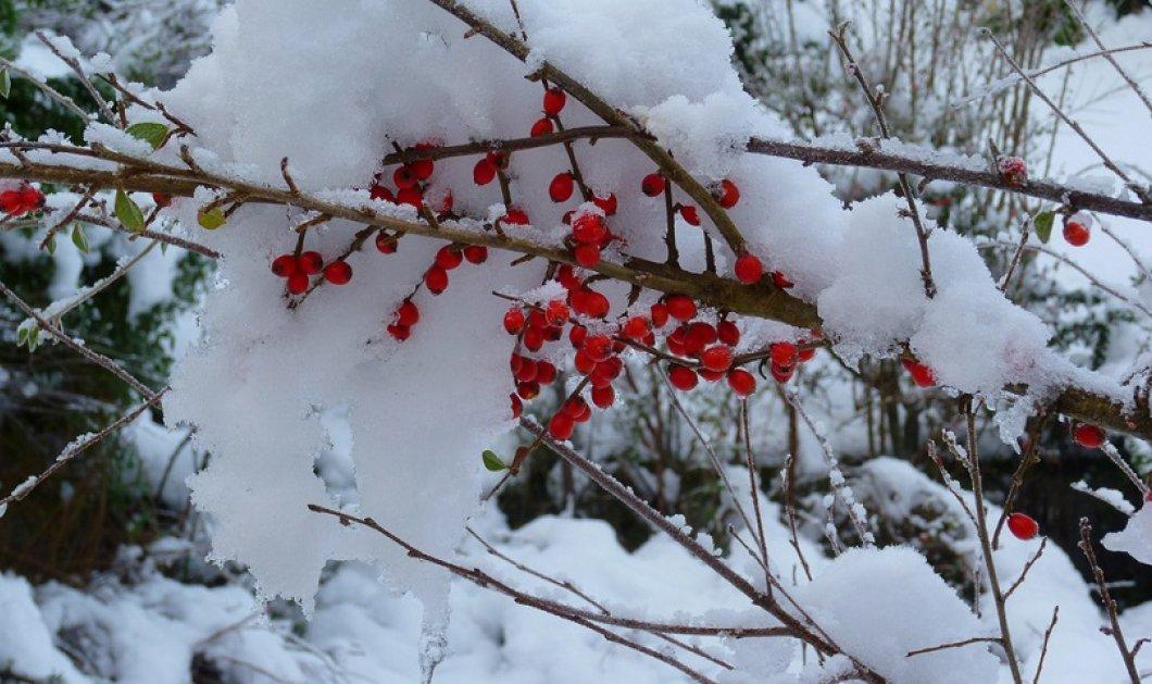 """Έρχεται νέα επιδείνωση του καιρού - Πού θα """"χτυπήσει"""" ο χιονιάς τις επόμενες ώρες   - Κυρίως Φωτογραφία - Gallery - Video"""