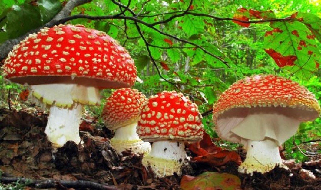 Τα μανιτάρια η κορυφαία τροφή για την αντιγήρανση - Τα καλύτερα αντιοξειδωτικά της φύσης - Κυρίως Φωτογραφία - Gallery - Video
