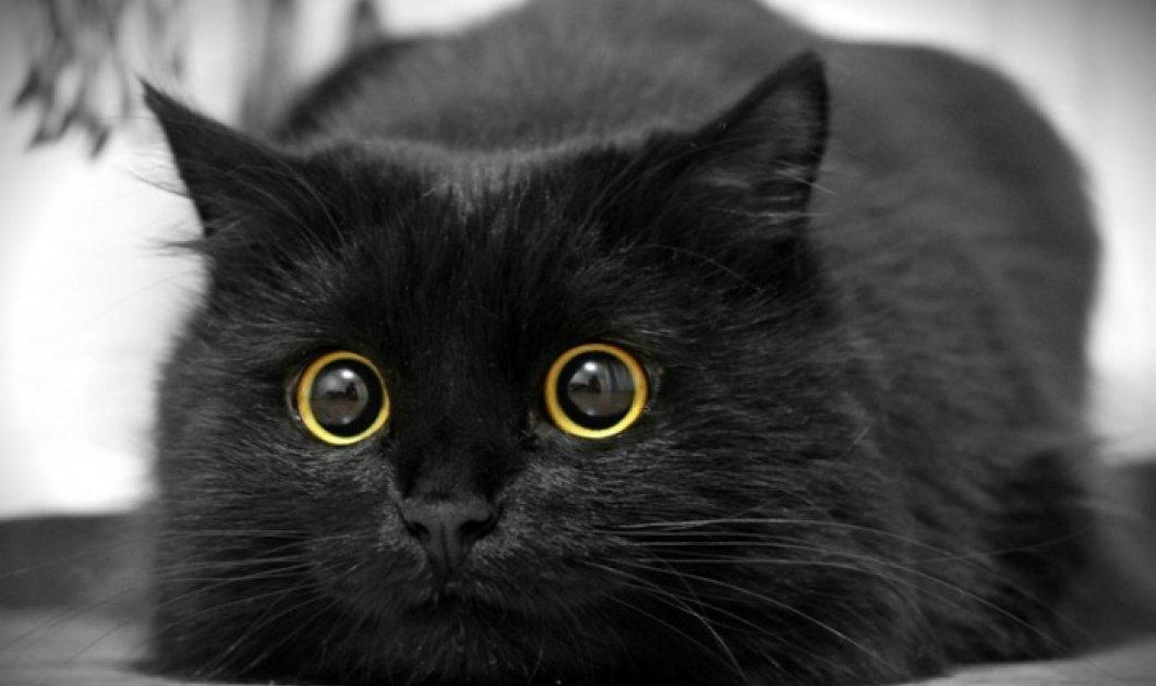 20 εντυπωσιακές γάτες μαύρες σαν το σκοτάδι - Θα σας ξετρελάνουν!  - Κυρίως Φωτογραφία - Gallery - Video
