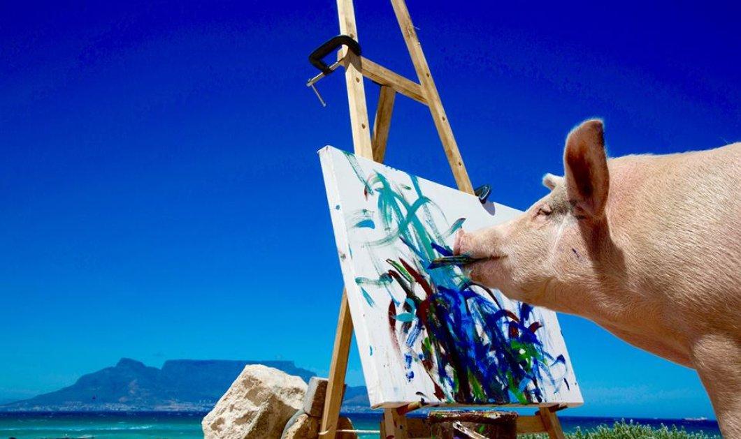 Κυρίες και κύριοι αυτή είναι η Pigcasso - Η γουρουνίτσα ζωγράφος που τα έργα τέχνης που δημιουργεί πωλούνται για χιλιάδες δολάρια! (ΦΩΤΟ- ΒΙΝΤΕΟ) - Κυρίως Φωτογραφία - Gallery - Video