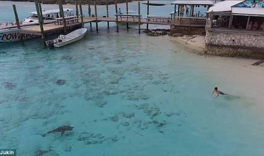 Βίντεο: Αγόρι γλιτώνει από επίθεση με 4 καρχαρίες στις Μπαχάμες  - Κυρίως Φωτογραφία - Gallery - Video
