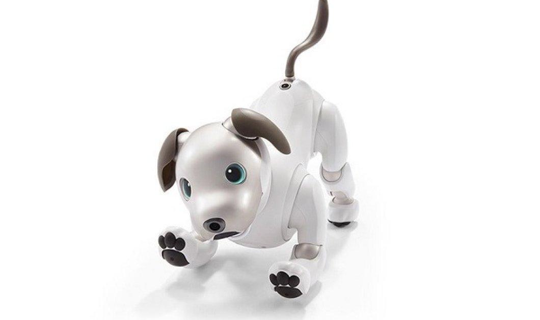 Γνωρίστε τον Αϊμπο! Τον σκύλο ρομπότ που επανακυκλοφορεί με περισσότερα... συναισθήματα (ΒΙΝΤΕΟ) - Κυρίως Φωτογραφία - Gallery - Video