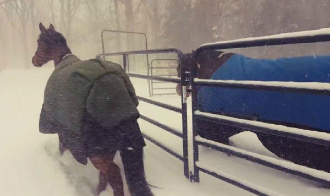 Smile Βίντεο: Το Internet γελάει βλέποντας αυτά τα άλογα να παίζουν ελεύθερα στο χιόνι όταν τα άφησε ο ιδιοκτήτης τους - Κυρίως Φωτογραφία - Gallery - Video