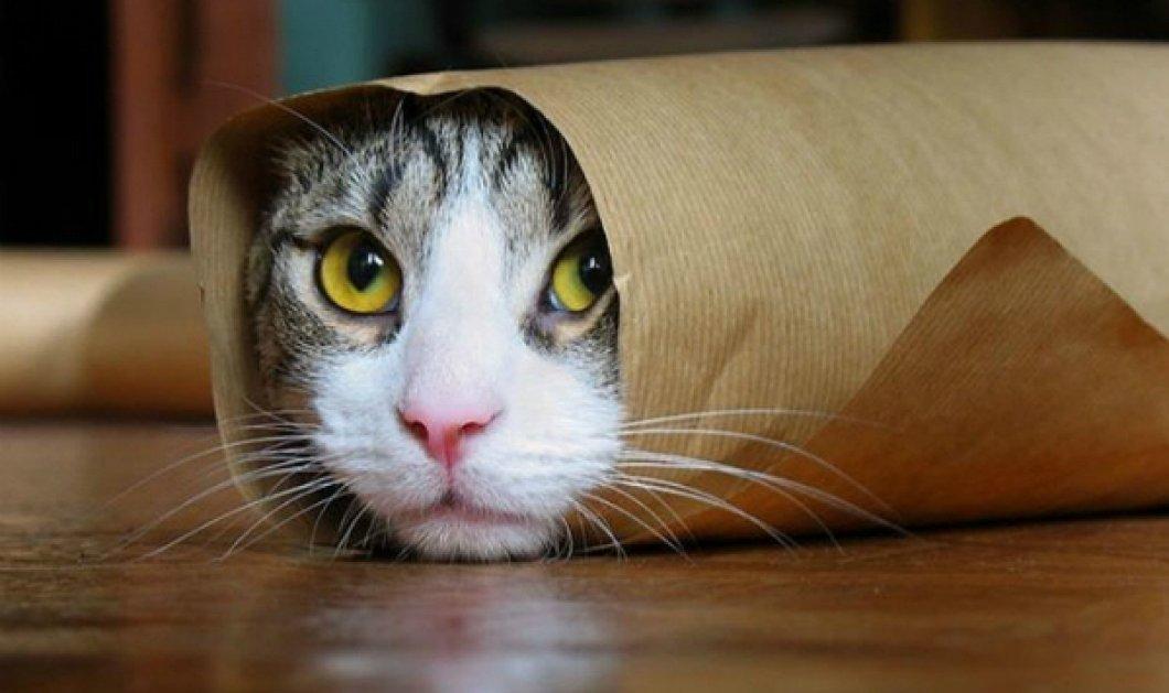 Smile βίντεο: Όταν γατάκι νομίζει ότι είναι σκύλος και.... κυνηγάει μπάλες! - Κυρίως Φωτογραφία - Gallery - Video
