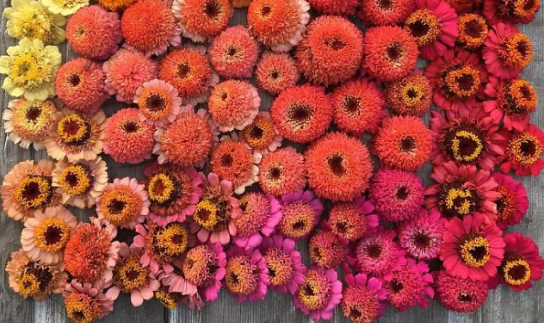 Ολάνθιστα λουλούδια μας κερδίζουν! Ανθοπώλης τα φωτογραφίζει στο Instagram & σπάει τα κοντέρ (ΦΩΤΟ) - Κυρίως Φωτογραφία - Gallery - Video