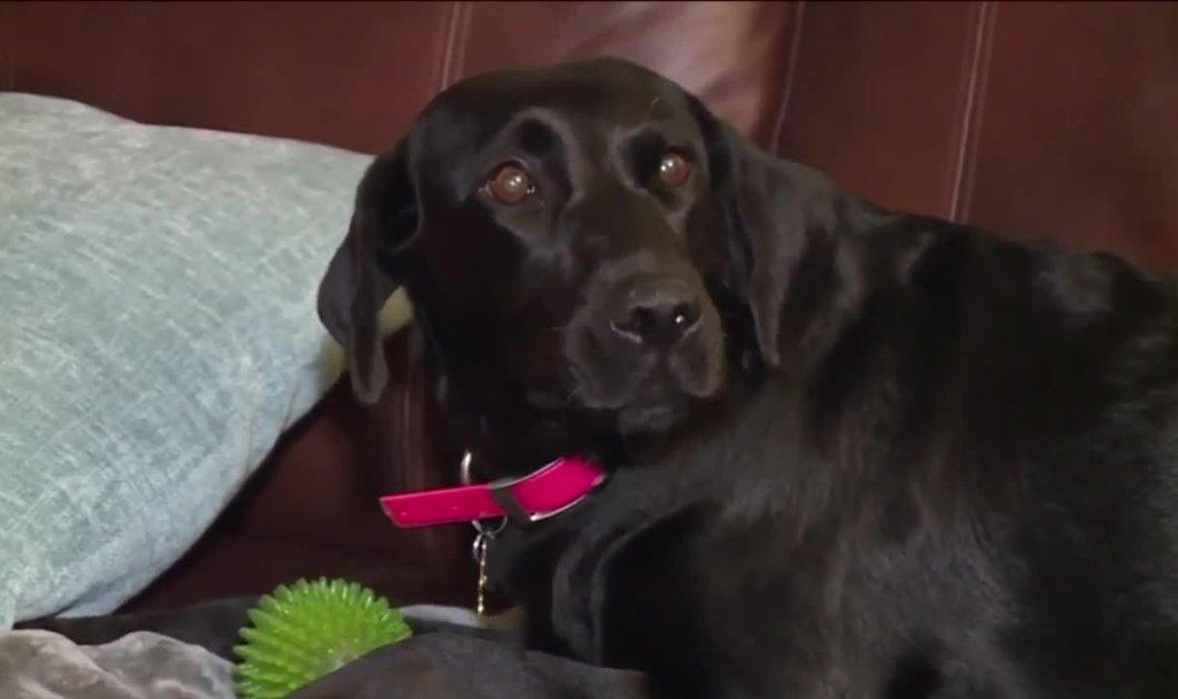 Ο σκύλος που έσωσε όλη την οικογένεια - Τι έκανε αυτός ο τετράποδος ήρωας;  - Κυρίως Φωτογραφία - Gallery - Video