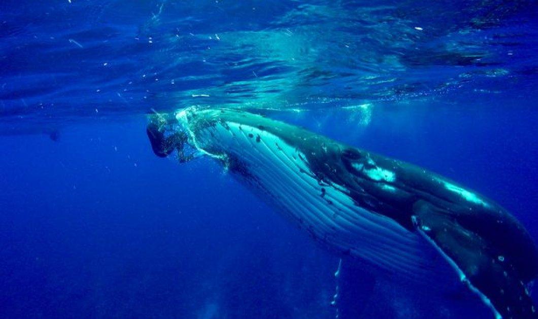 Βίντεο: Όταν η υδροβιολόγος Nan διασώθηκε από τον αλτρουισμό & την ευαισθησία μίας φάλαινας - Κυρίως Φωτογραφία - Gallery - Video