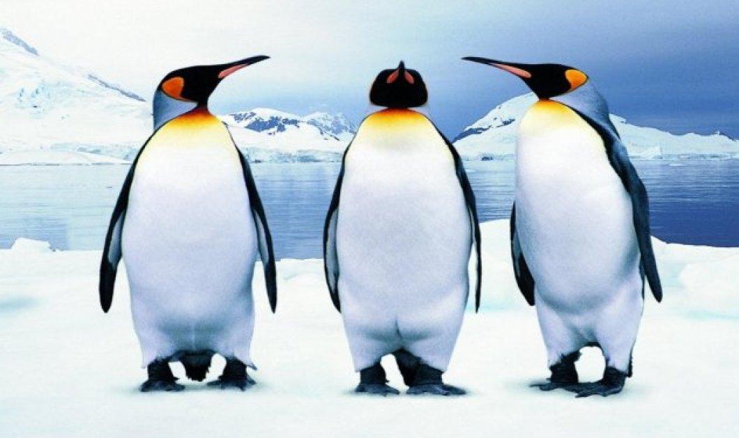 Η funny είδηση της ημέρας: 2 πιγκουινάκια τρύπωσαν στο World Trade Center της Νέας Υόρκης! - Κυρίως Φωτογραφία - Gallery - Video