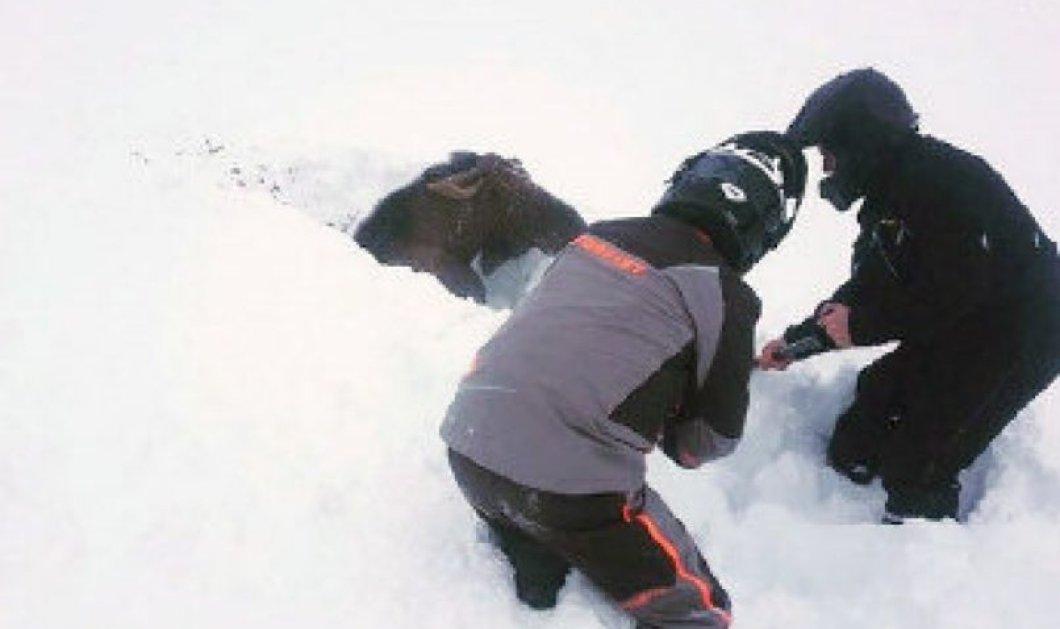Απίθανο βίντεο με την διάσωση ενός ελαφιού στο Καναδά! Είχε θαφτεί μέσα στο χιόνι  - Κυρίως Φωτογραφία - Gallery - Video