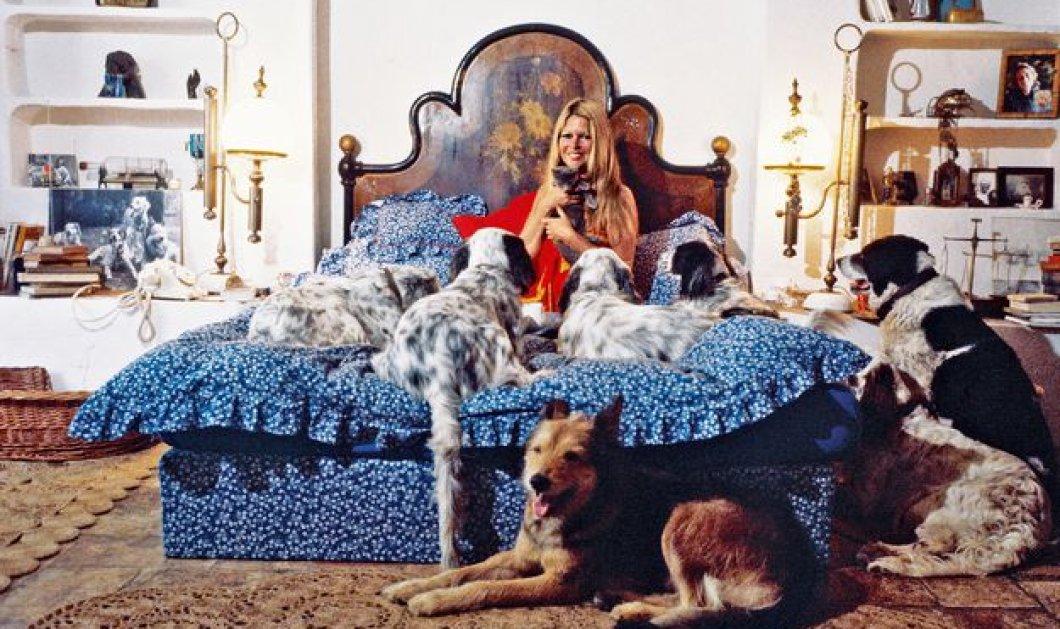 """Μπριζίτ Μπαρντό - Ο ζωντανός μύθος δηλώνει: """"Είμαι ένα ζώο"""" (ΦΩΤΟ-ΒΙΝΤΕΟ) - Κυρίως Φωτογραφία - Gallery - Video"""