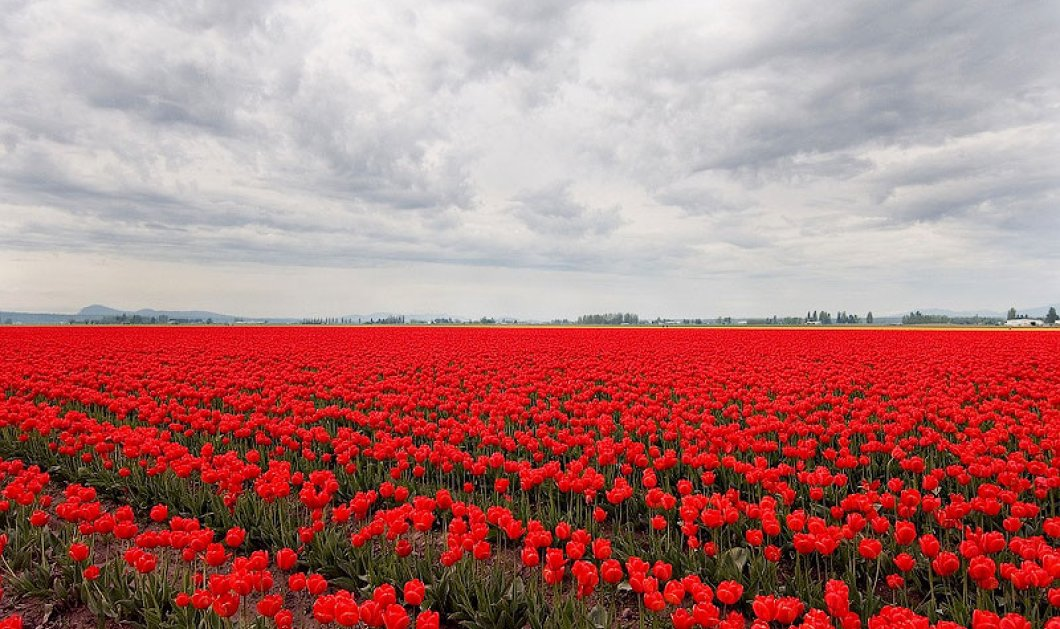 Η φύση δημιουργεί...: Δείτε πως σχηματίζονται οι σημαίες κρατών μέσα από τα χρώματα της υπαίθρου (ΦΩΤΟ)  - Κυρίως Φωτογραφία - Gallery - Video