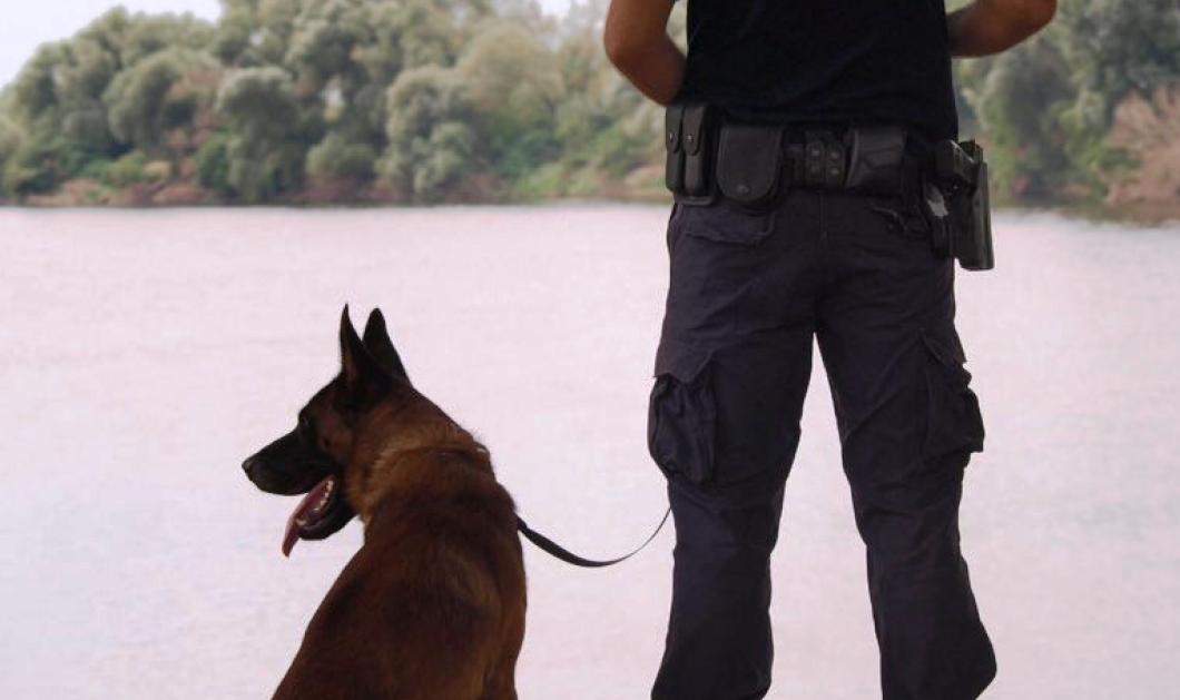 Η ΕΛΑΣ αποχαιρετά με ένα μεγάλο «ευχαριστώ» τον σκύλο περιπολίας Satan που πέθανε  - Κυρίως Φωτογραφία - Gallery - Video