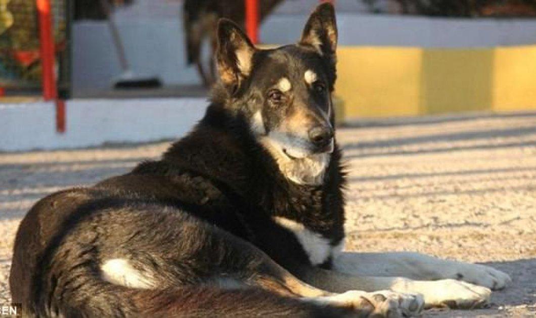 Απίστευτο! Πιστός σκύλος πέθανε στο τάφο του αφεντικού του  -Κοιμόταν εκεί για 11 χρόνια (ΦΩΤΟ - ΒΙΝΤΕΟ)   - Κυρίως Φωτογραφία - Gallery - Video