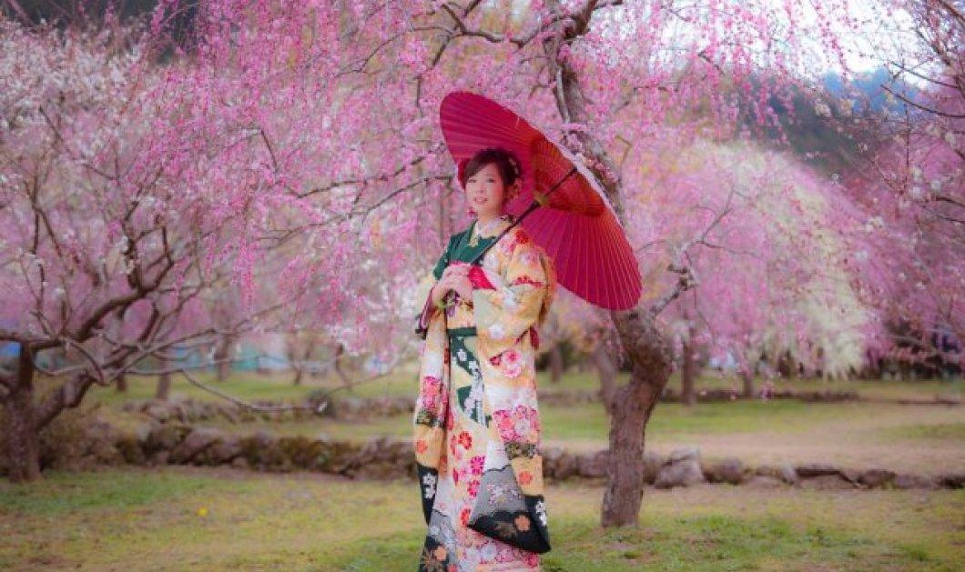 Ιάπωνας φωτογράφος απαθανατίζει την ομορφιά της φύσης μέσα από ονειρικές κερασιές γεμάτες χρώματα - Κυρίως Φωτογραφία - Gallery - Video