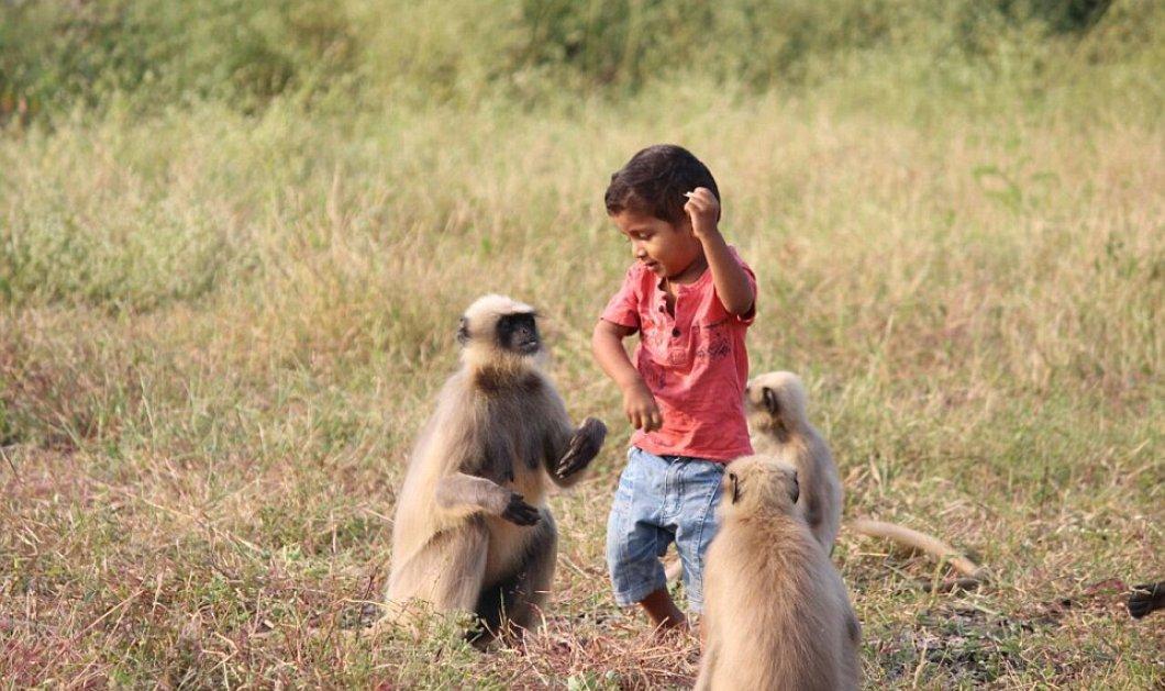 Ο σύγχρονος Μόγλης της Ινδίας: Η ασυνήθιστη φιλία ενός δίχρονου αγοριού με τις μαϊμούδες (ΦΩΤΟ - ΒΙΝΤΕΟ) - Κυρίως Φωτογραφία - Gallery - Video