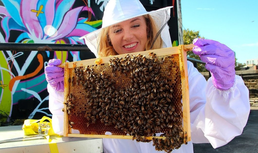 Αποκλ. Wikifarmer - eirinika: Πώς οι μέλισσες φτιάχνουν μέλι & πώς εσείς θα γίνετε μελισσοκόμος & ας μην ξέρετε τίποτε  - Κυρίως Φωτογραφία - Gallery - Video
