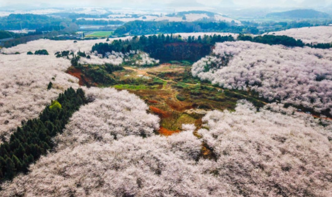 Μια λέξη, μαγεία... Από ψηλά με drone οι ανθισμένοι κήποι της Κίνας - Ζωγραφική με τέμπερες (ΦΩΤΟ - ΒΙΝΤΕΟ)  - Κυρίως Φωτογραφία - Gallery - Video