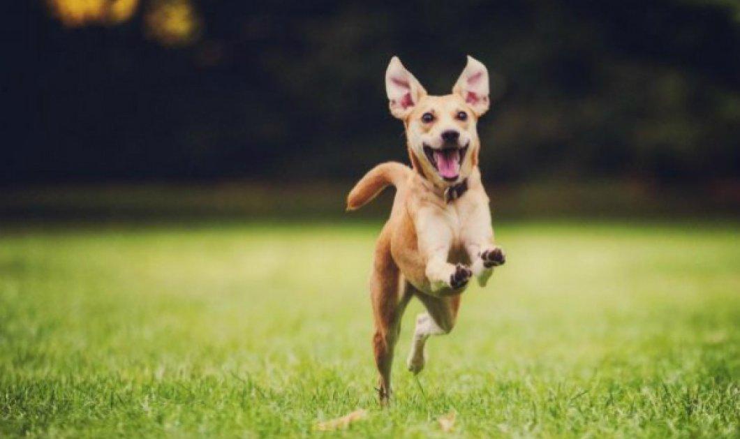 Ευτυχώς επέζησε ο σκυλάκος που φαντάροι έριξαν... για πλάκα στον γκρεμό - Σχηματίζεται δικογραφία σε βάρος τους - Κυρίως Φωτογραφία - Gallery - Video