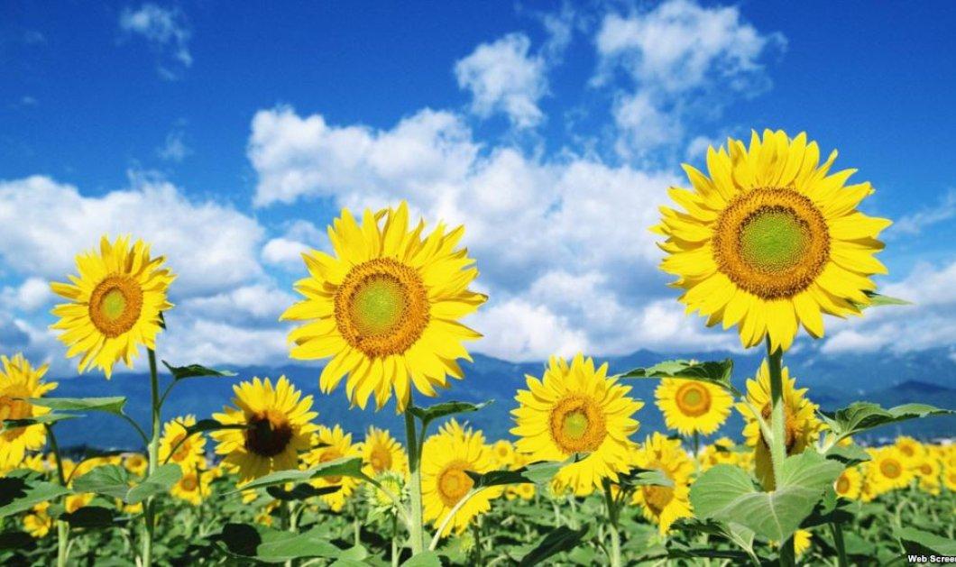Καιρός για ηλιόλουστη Κυριακή & ατελείωτες βόλτες -Αναλυτική πρόγνωση - Κυρίως Φωτογραφία - Gallery - Video