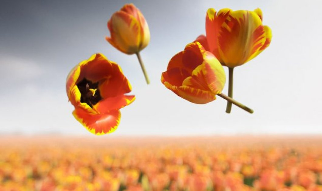 Υπέροχα λουλούδια στον αέρα από την Claire Droppert που φέρνουν πιο κοντά την Άνοιξη - Κυρίως Φωτογραφία - Gallery - Video