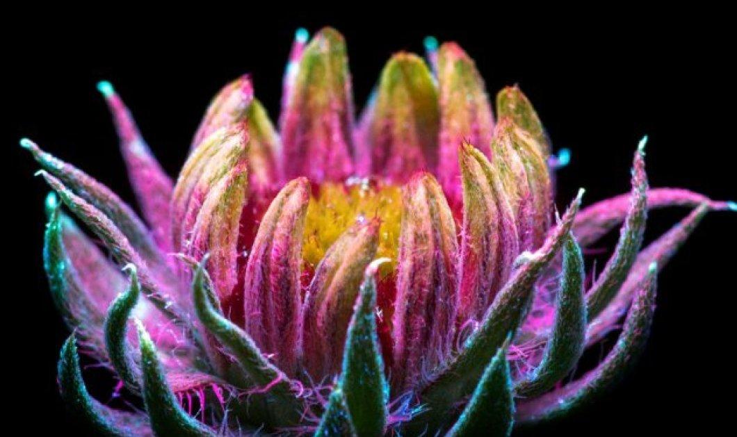 O Craig Burrows φωτογραφίζει λουλούδια που λάμπουν στο σκοτάδι! Το αποτέλεσμα θα σας καταπλήξει - Κυρίως Φωτογραφία - Gallery - Video