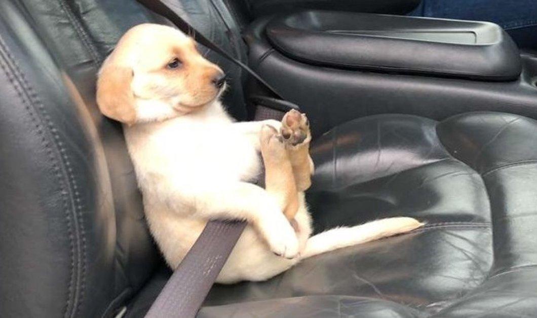 Smile! Σκύλος φόρεσε ζώνη ασφαλείας και η φωτογραφία έλιωσε το ίντερνετ  - Κυρίως Φωτογραφία - Gallery - Video