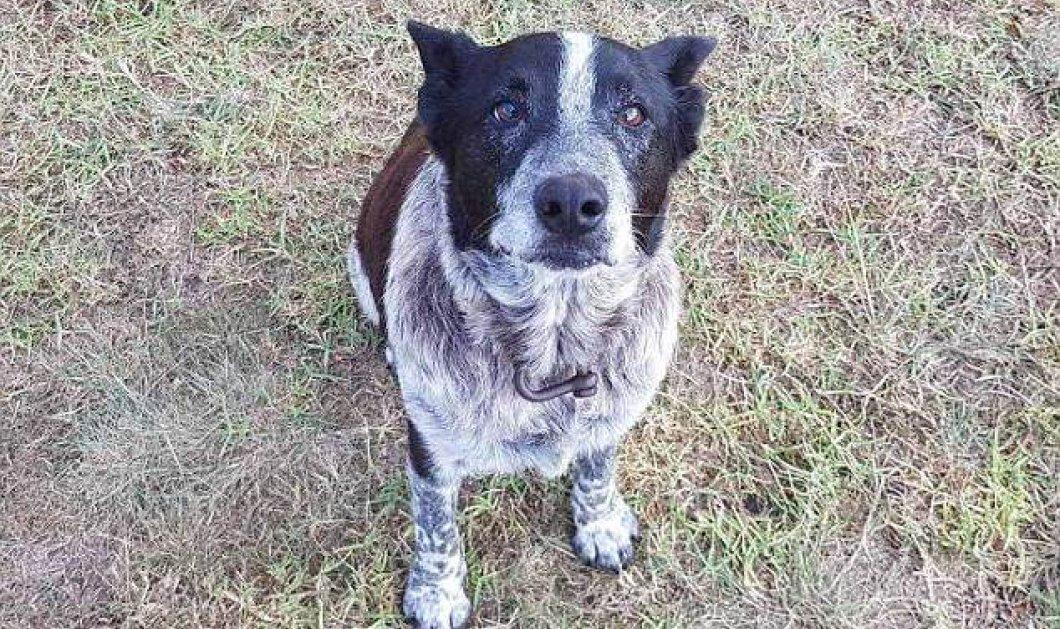 """17χρονος κουφός & μερικώς τυφλός σκύλος έγινε """"φύλακας άγγελος"""" για αγνοούμενο κορίτσι - Κυρίως Φωτογραφία - Gallery - Video"""