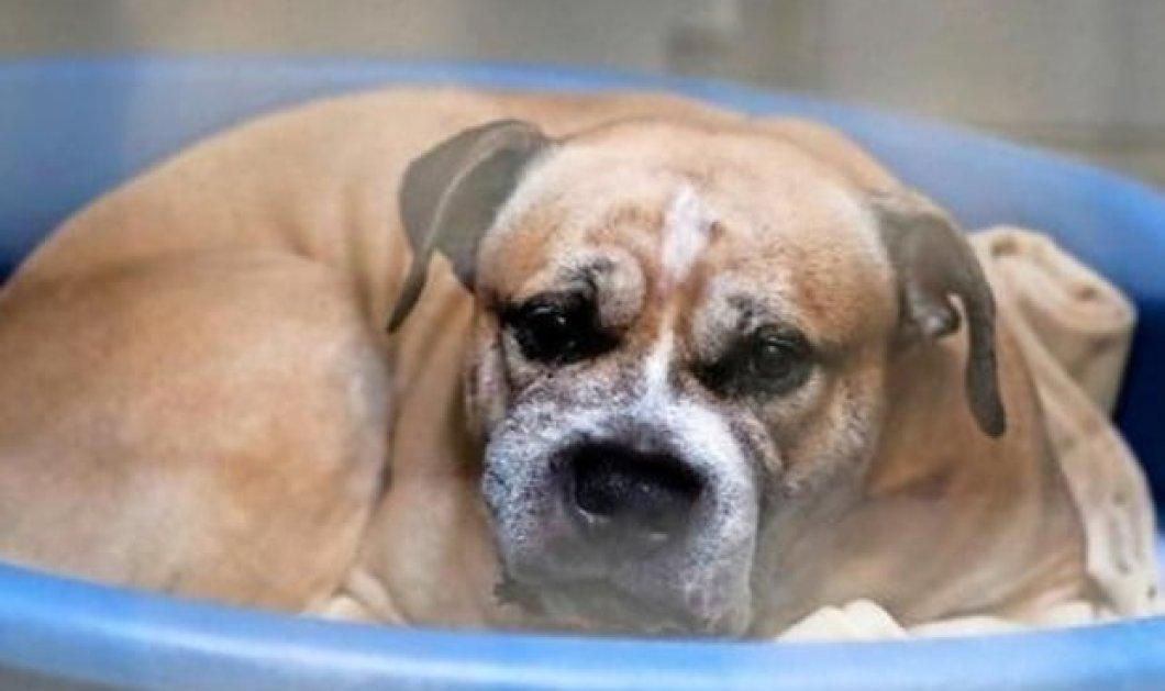Ο σκύλος Τσίκο κατακρεούργησε τα αφεντικά του- 250.000 υπέγραψαν να μην θανατωθεί & να τον υιοθετήσουν - Κυρίως Φωτογραφία - Gallery - Video