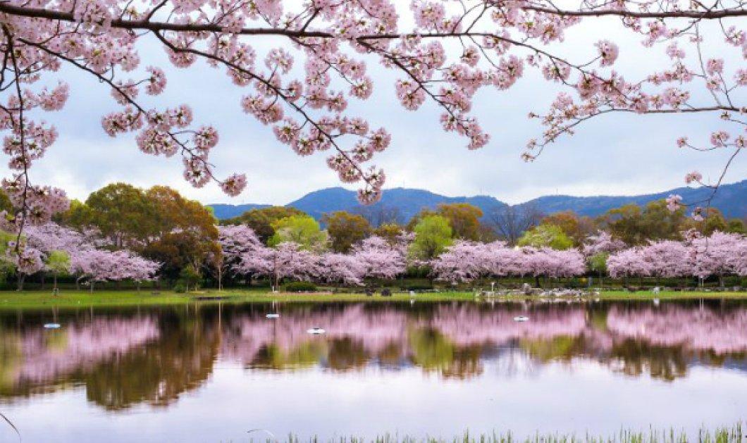 Η ομορφιά της φύσης μας μαγεύει... Ταξιδάκι στην ολάνθιστη Ιαπωνία την Άνοιξη; Φύγαμε! (ΦΩΤΟ) - Κυρίως Φωτογραφία - Gallery - Video