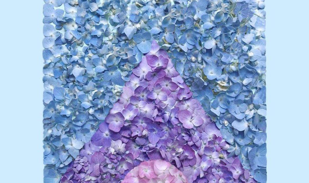 Απίθανες δημιουργίες της καλλιτέχνιδας Kristen Meyer: Κοχύλια, πέταλα λουλουδιών, μπισκότα ή φύλλα δέντρων σε μοναδικά έργα (ΦΩΤΟ)  - Κυρίως Φωτογραφία - Gallery - Video