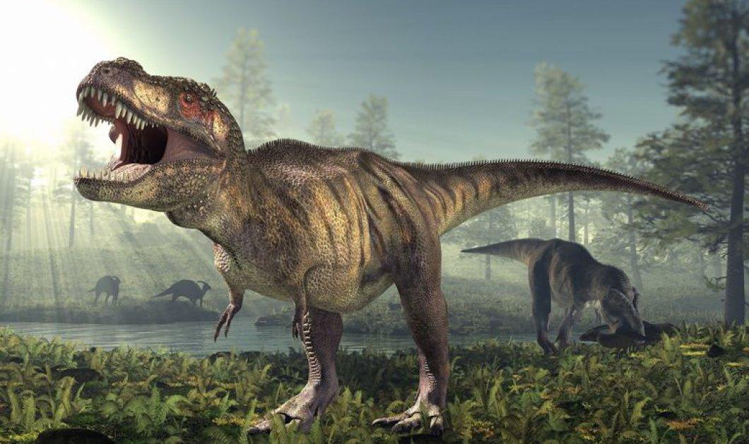 Αποτυπώματα δεινοσαύρου ηλικίας 170 εκατ. ετών βρέθηκαν στο νησί Skye της Σκωτίας! (ΒΙΝΤΕΟ) - Κυρίως Φωτογραφία - Gallery - Video