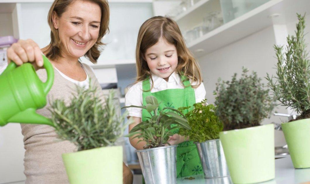 Πως να σώσετε τα φυτά σας από το να μην σαπίσουν με ένα φίλτρο του καφέ!  - Κυρίως Φωτογραφία - Gallery - Video
