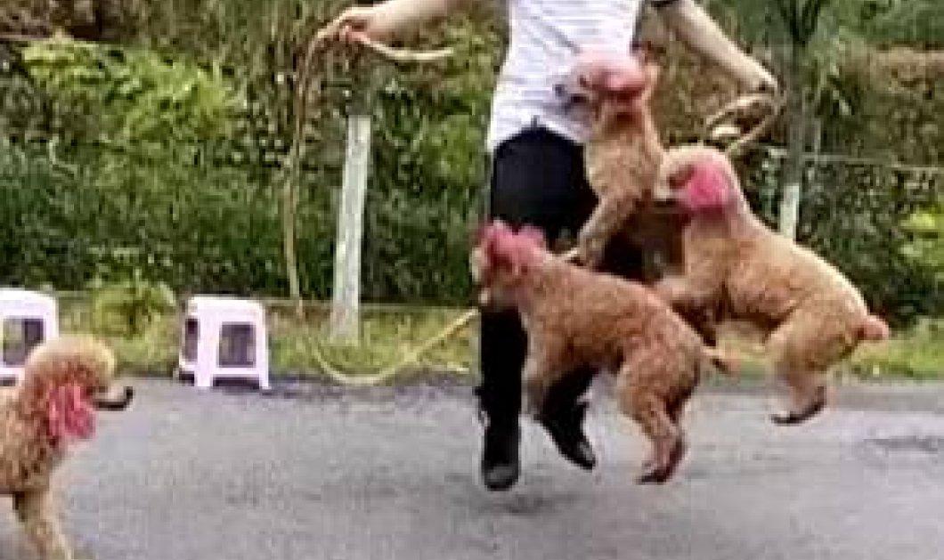 Απίθανο βίντεο με χαριτωμένα σκυλάκια να κάνουν σκοινάκι με ιδιοκτήτη τους! - Κυρίως Φωτογραφία - Gallery - Video