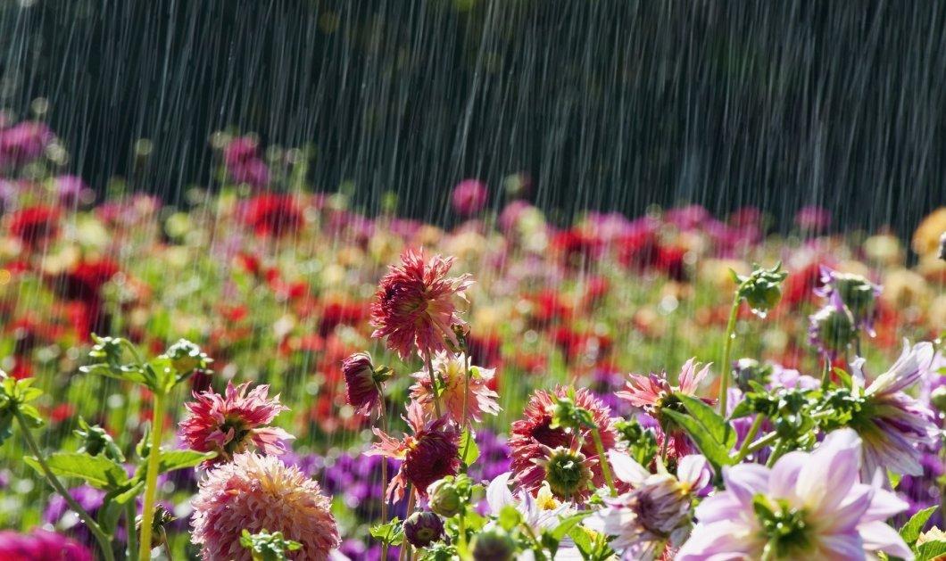 Αγίου Πνεύματος: Σε ποιες περιοχές θα βρέξει αύριο Δευτέρα - Κυρίως Φωτογραφία - Gallery - Video