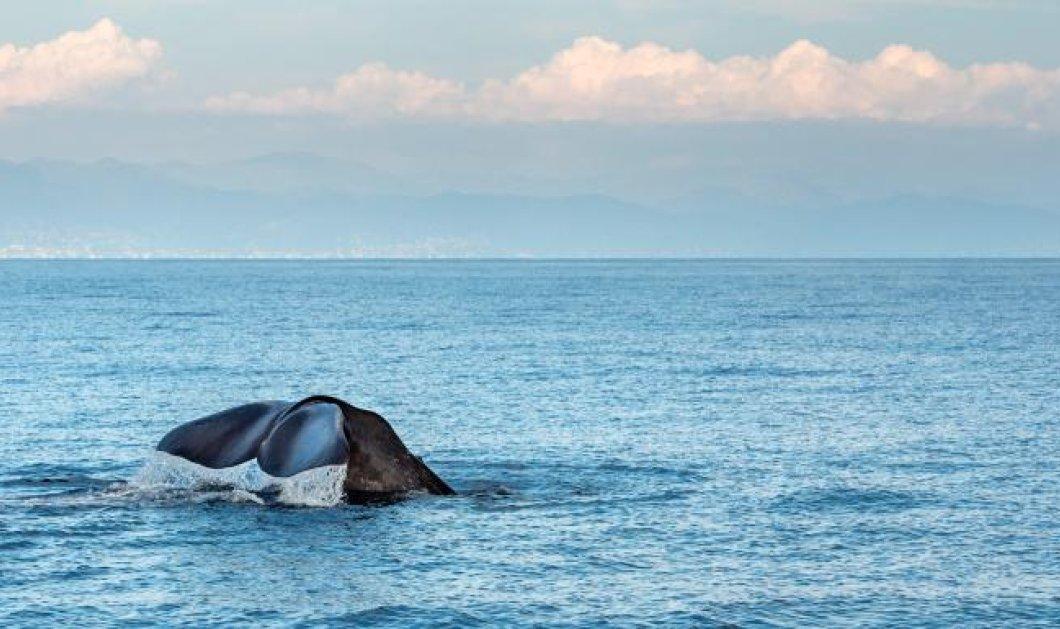Ανησυχία για την Μεσόγειο- Πως μια πλαστική σακούλα από μαγαζί της Θεσσαλονίκης σκότωσε μία φάλαινα στη Μύκονο - Κυρίως Φωτογραφία - Gallery - Video