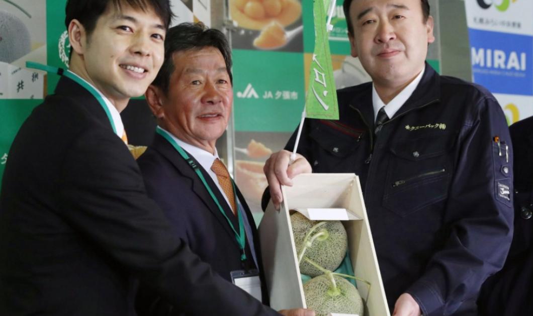 Δύο πεπόνια πωλήθηκαν έναντι των 30.000 δολ. σε δημοπρασία στην Ιαπωνία! (ΦΩΤΟ) - Κυρίως Φωτογραφία - Gallery - Video