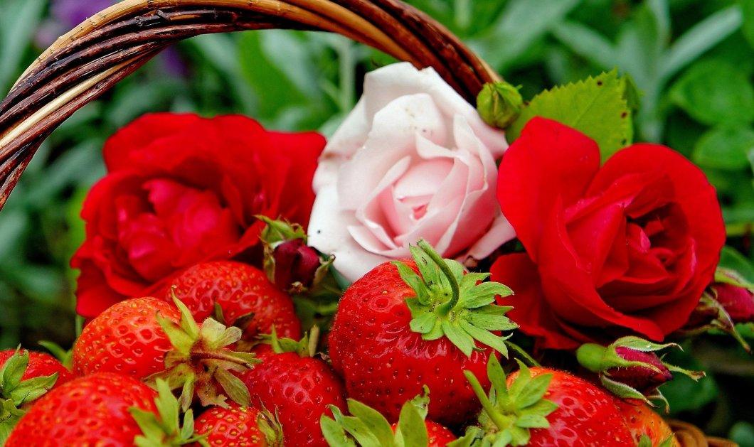 Τριαντάφυλλο & φράουλα πρώτα ξαδέλφια! Πως το DNA τους δείχνει οτι συγγενεύουν - Κυρίως Φωτογραφία - Gallery - Video