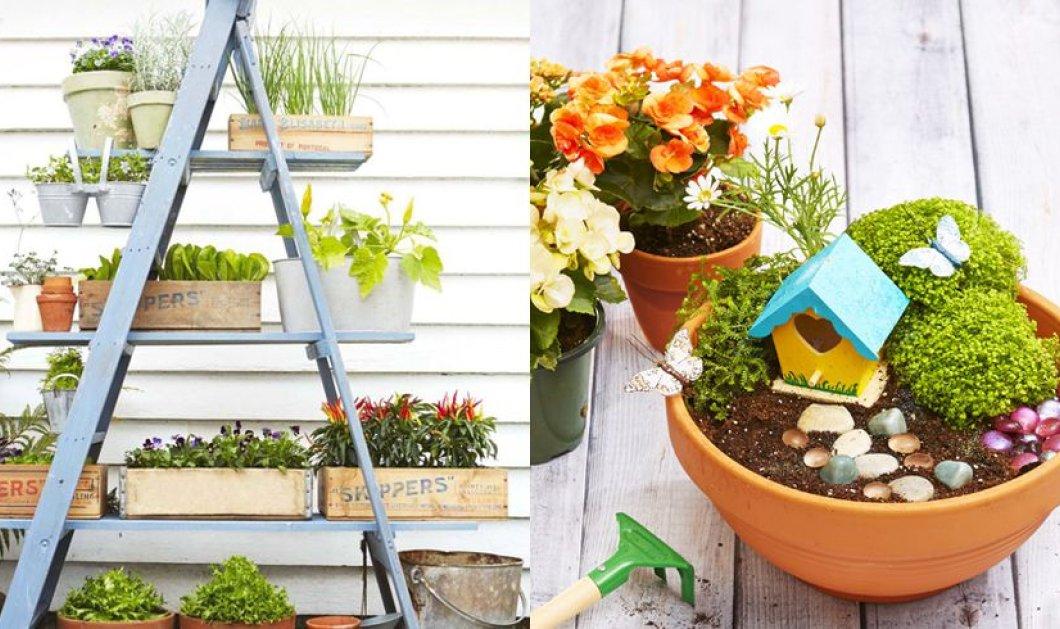 Μικρές ανθισμένες λεπτομέρειες κάνουν μεγάλη διαφορά στον κήπο ή το μπαλκόνι σας! (φωτό) - Κυρίως Φωτογραφία - Gallery - Video