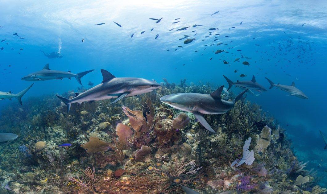 Φαντασμαγορικές εικόνες από τις ακτές της Κούβας: Απίστευτες λήψεις με λευκούς καρχαρίες & ότι υπάρχει κάτω από το νερό!   - Κυρίως Φωτογραφία - Gallery - Video