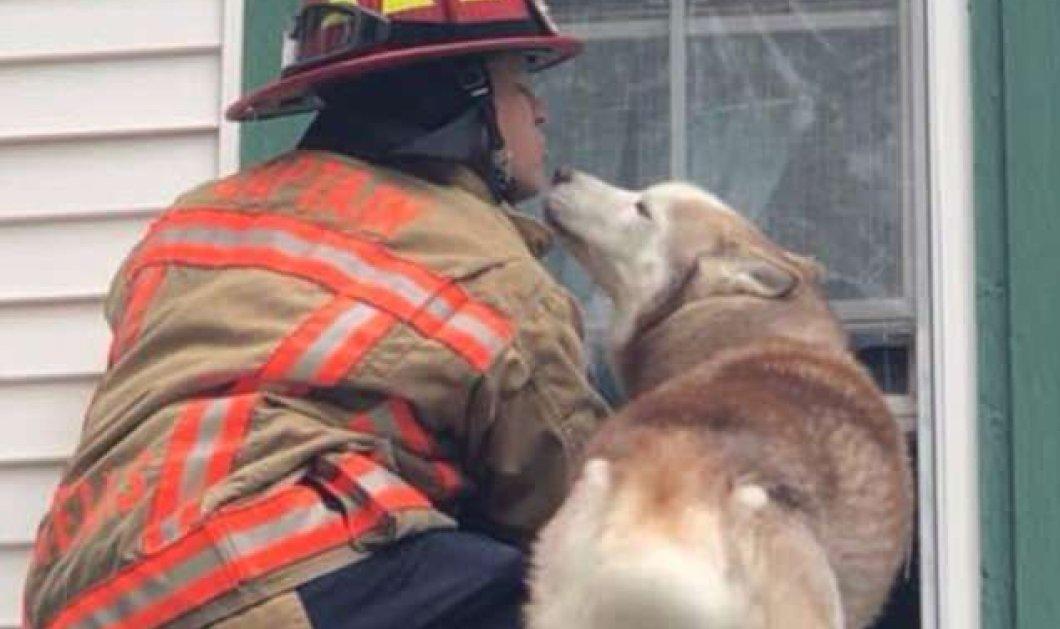 Αξιολάτρευτο βίντεο δείχνει σκύλο να φυλάει τον πυροσβέστη που τον έσωσε!  - Κυρίως Φωτογραφία - Gallery - Video