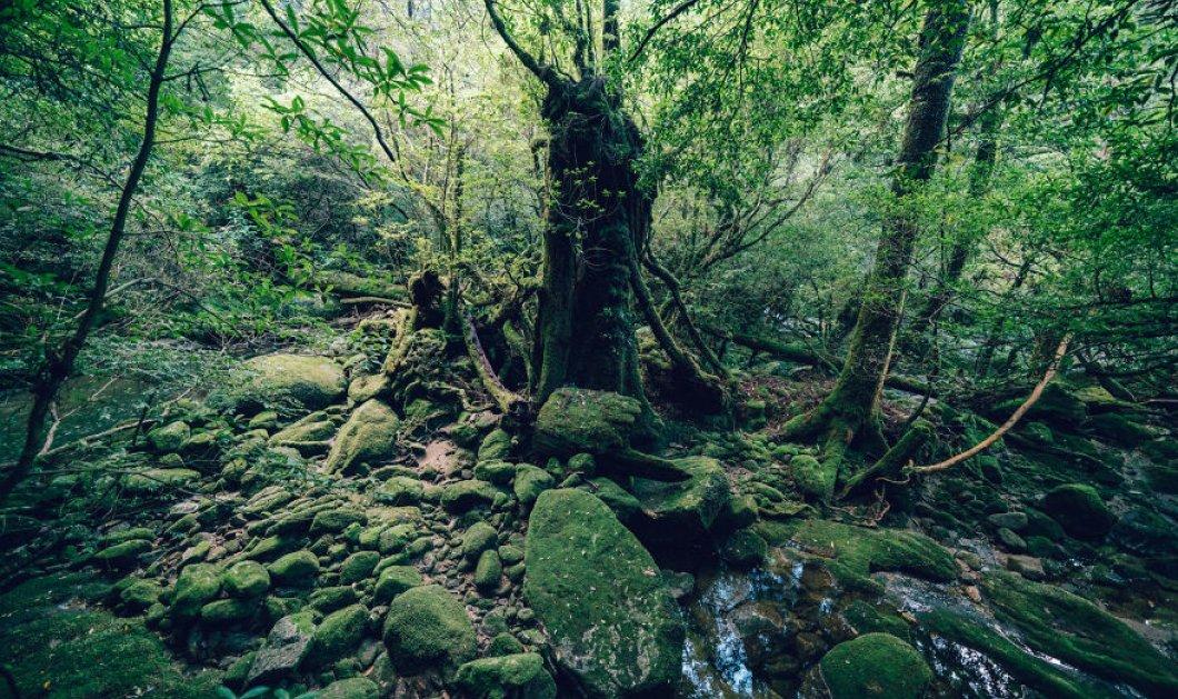 Shiratani Unsuikyo: Μέσα στο εντυπωσιακό αρχαίο δάσος της Ιαπωνίας- Πανέμορφα δέντρα ηλικίας χιλιάδων ετών (ΦΩΤΟ) - Κυρίως Φωτογραφία - Gallery - Video