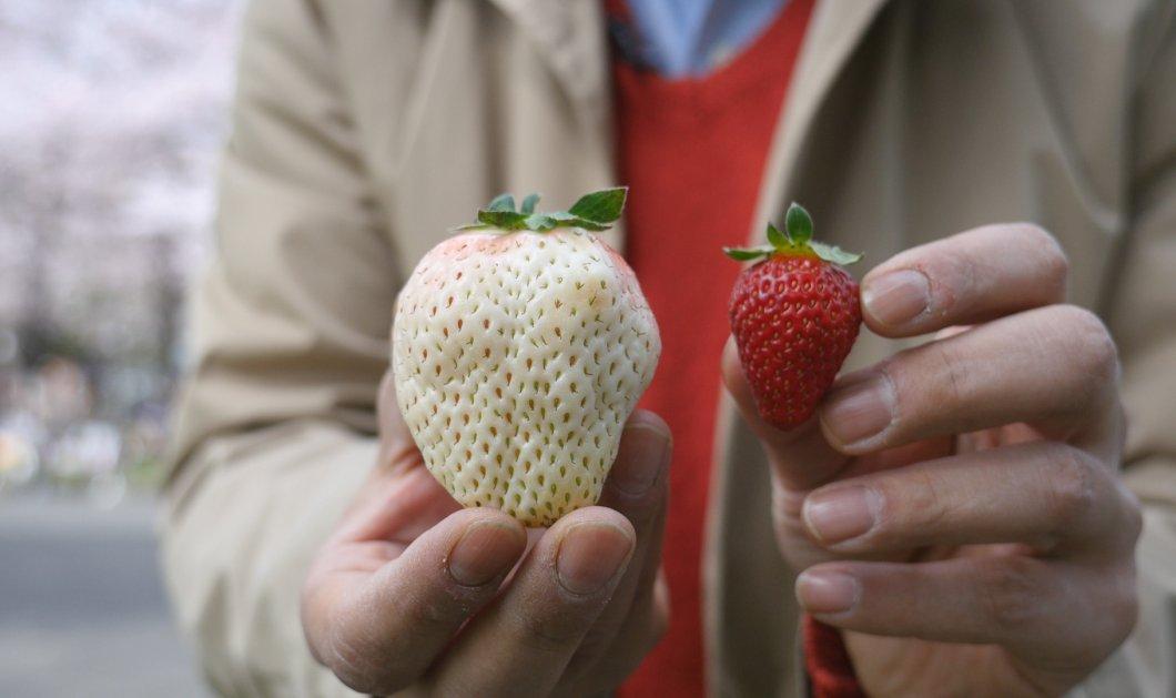 Έχετε δει άσπρες φράουλες; Υπάρχουν και κοστίζουν πολύ ακριβά (Φωτό & Βίντεο) - Κυρίως Φωτογραφία - Gallery - Video
