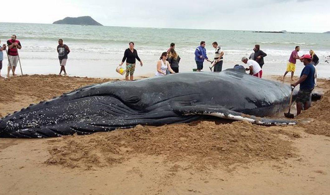 Ταϊλάνδη: Το πλαστικό σκότωσε μία ακόμη φάλαινα- Είχε καταπιεί 80 σακούλες! (ΒΙΝΤΕΟ) - Κυρίως Φωτογραφία - Gallery - Video