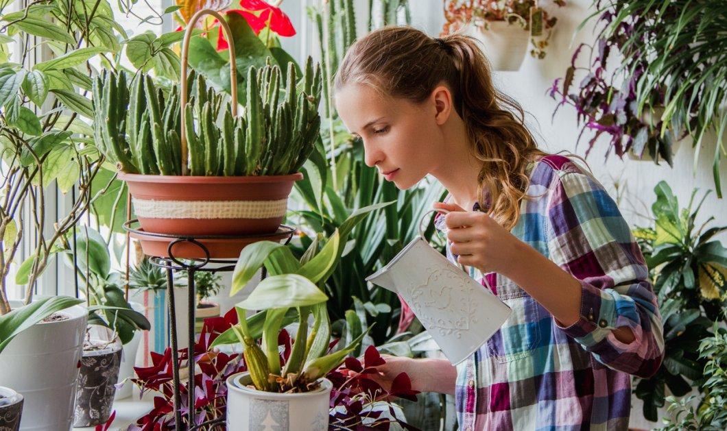 Ποιο φυτό σας ταιριάζει ανάλογα με το ζώδιό σας: Οι Παρθένοι επιλέγουν την αζαλέα κι οι Υδροχόοι την μπιγκόνια (Φωτό) - Κυρίως Φωτογραφία - Gallery - Video