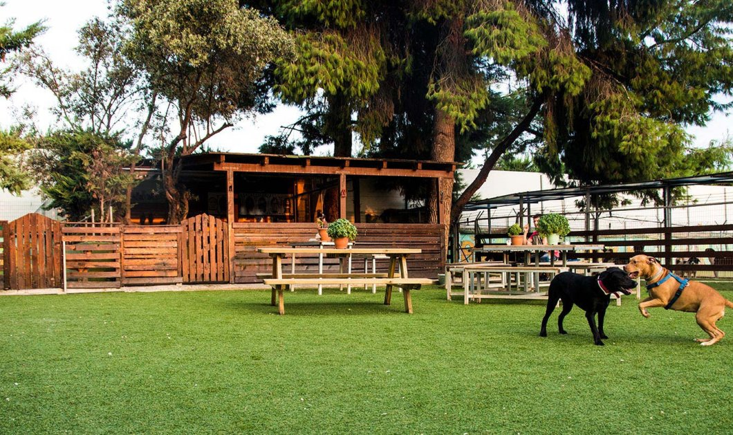 Puppies Park: Εδώ ο σκύλος σας εκπαιδεύεται και κοινωνικοποιείται - Πέφτει στην πισίνα η το αφήνετε για dog sitting και dog walking - Κυρίως Φωτογραφία - Gallery - Video